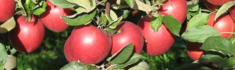 Agricoltura. Uso sostenibile dei prodotti fitosanitari e tutela della salute dei cittadini: elaborare la Carta del Rischio