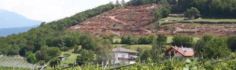 Interrogazione. Intervento di privati con disboscamento ai piedi del monte Celva