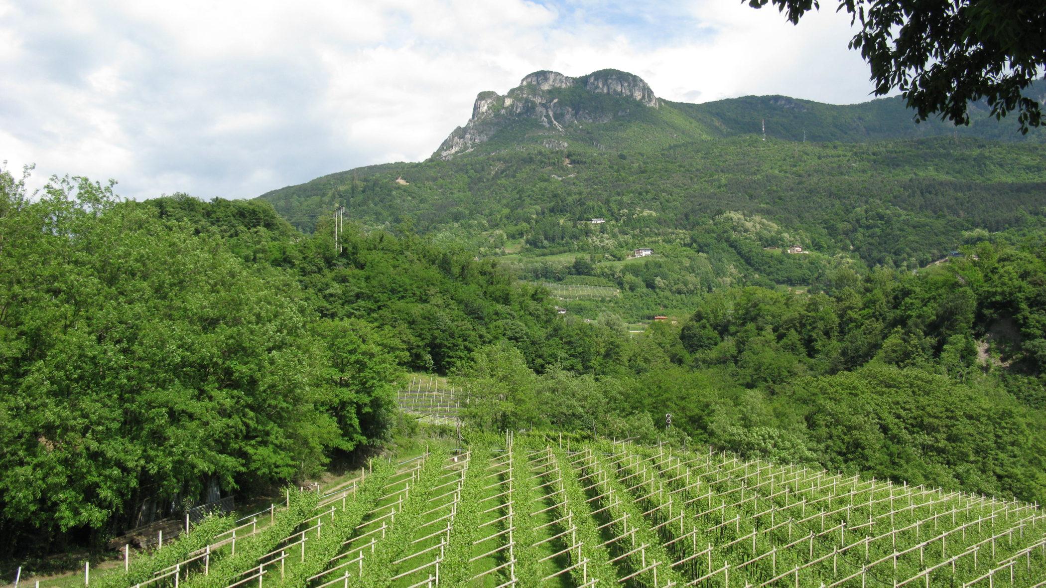 Uso sostenibile dei prodotti fitosanitari: contributo propositivo