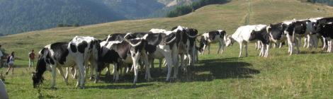 """Interrogazione: stato di avanzamento del Progetto """"Parco Naturale del Monte Bondone"""""""