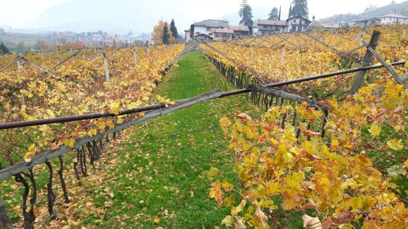 Nutrire Trento: una proposta di lavoro per la Commissione Ambiente Agricoltura Turismo